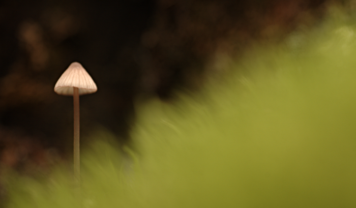 A small mushroom behind out-of-focus moss.