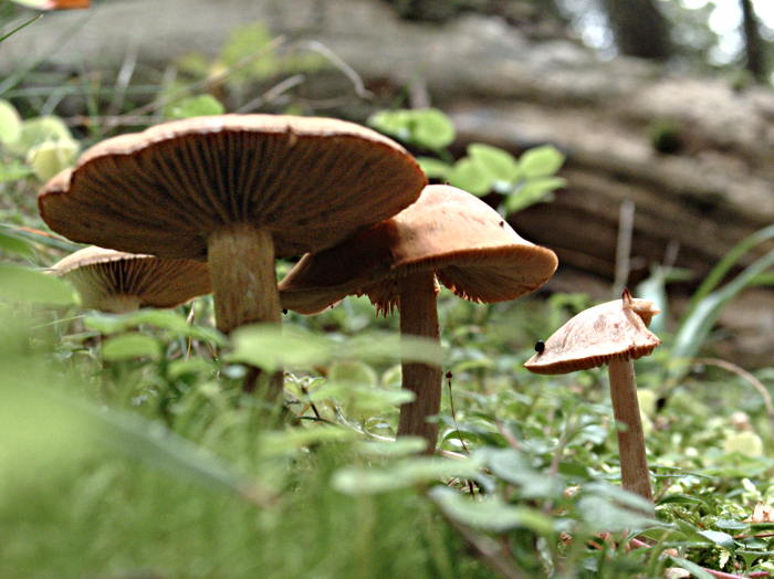 Four mushrooms in a group, seen from below.